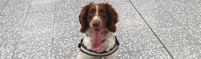 Major training exercise sees dogs sniff out 'explosives' at Bristol Airport